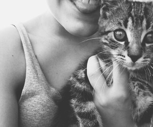b&w, black and white, and cat image