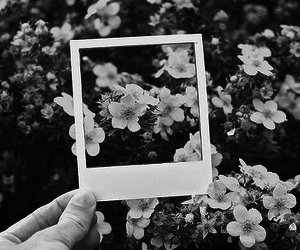 flowers, photography, and black and white image