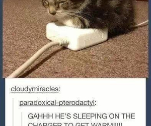 cat, tumblr, and text post image