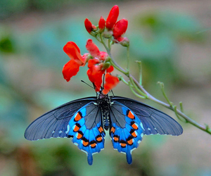blue, flowers, and butterfly image
