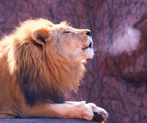 animals, love, and king image