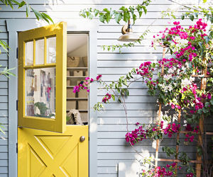 yellow, flowers, and door image