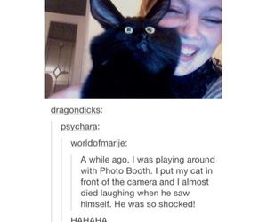 cats, tumblr, and funny image