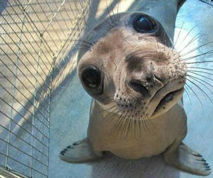 animal, seal, and funny image