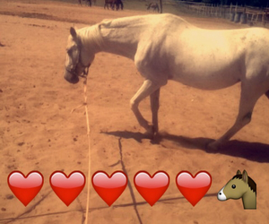 heart, horse, and my image