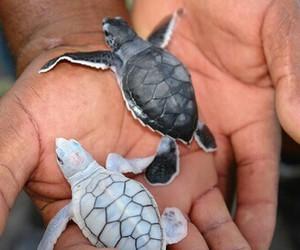 adorable, baby animals, and animal image