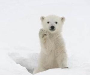 cute and Polar Bear image