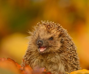 animal, leaves, and autumn image