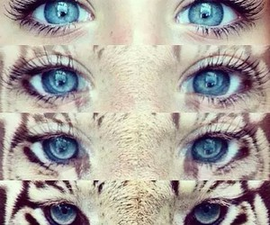 eyes, tiger, and blue image