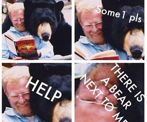 bear, funny, and help image
