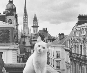 cat, cute, and city image