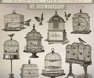 bird, birdcage, and clipart image