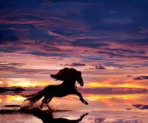 horse, black, and nature image