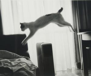 araki, cat, and photography image