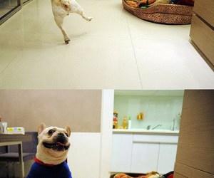 dog and superman image