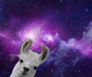 llama, space, and star image