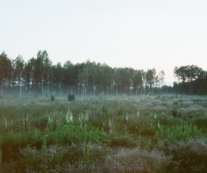 analog, green, and indie image
