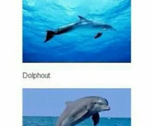 dolphin, funny, and blue image