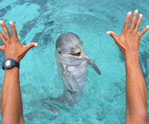 animal, dolphin, and awesome image