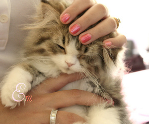 adorable, hand, and kitty image