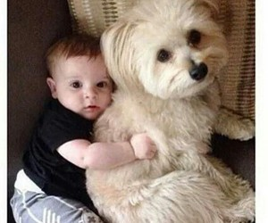 baby, cute, and dog image