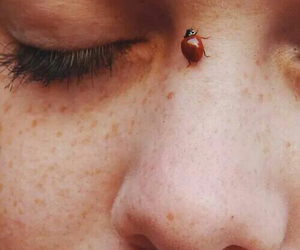 indie, ladybug, and face image