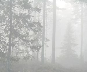pale, forest, and grunge image