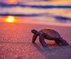 beach, sunset, and turtle image