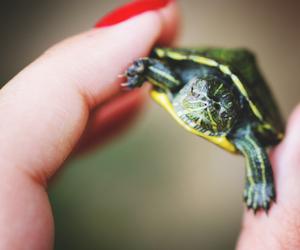 animal and turtle image