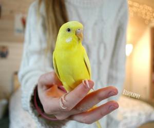 bird, animal, and tumblr image