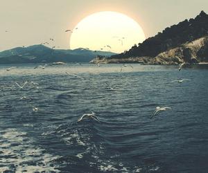 sea, sun, and bird image