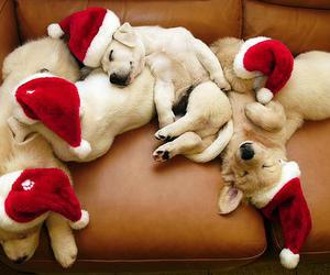 christmas, golden retriever, and puppies image