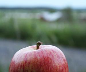 apple, night, and summer image