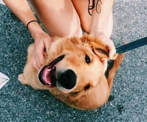 dog, animal, and orange image