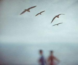 birds, blue, and boy image
