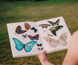 butterfly, vintage, and book image