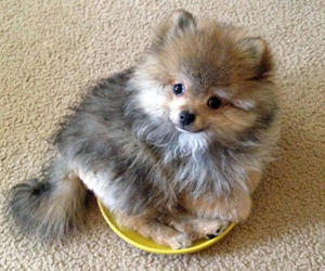 dog, puppy, and cute animals image