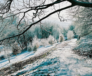 tree, winter, and nature image