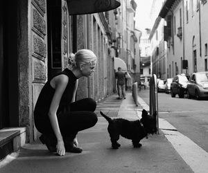 photography, dog, and fashion image