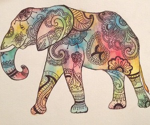 elephant and indie image