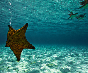 ocean, starfish, and sea image