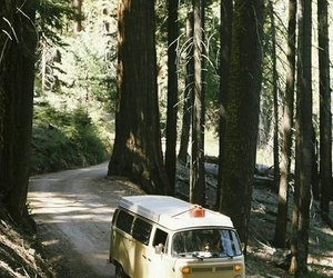 beautiful, car, and forest image