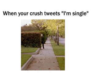 crush, funny, and single image