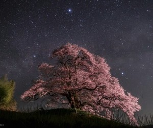 pink, tree, and universe image