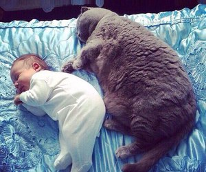 cat, family, and love image