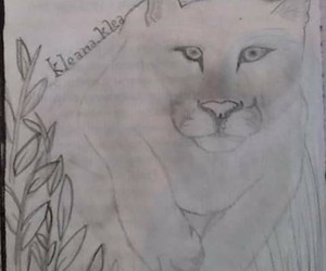 drawing, nice, and tiger image