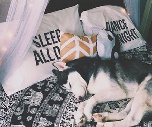 dog, husky, and bedroom image