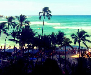 beach, palm, and relax image