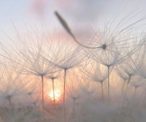 dandelion, sun, and nature image
