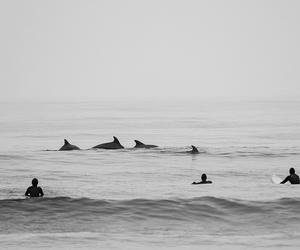 surf, ocean, and surfer image